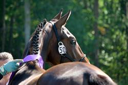 PBF Sporthorse Breed Show, 2012