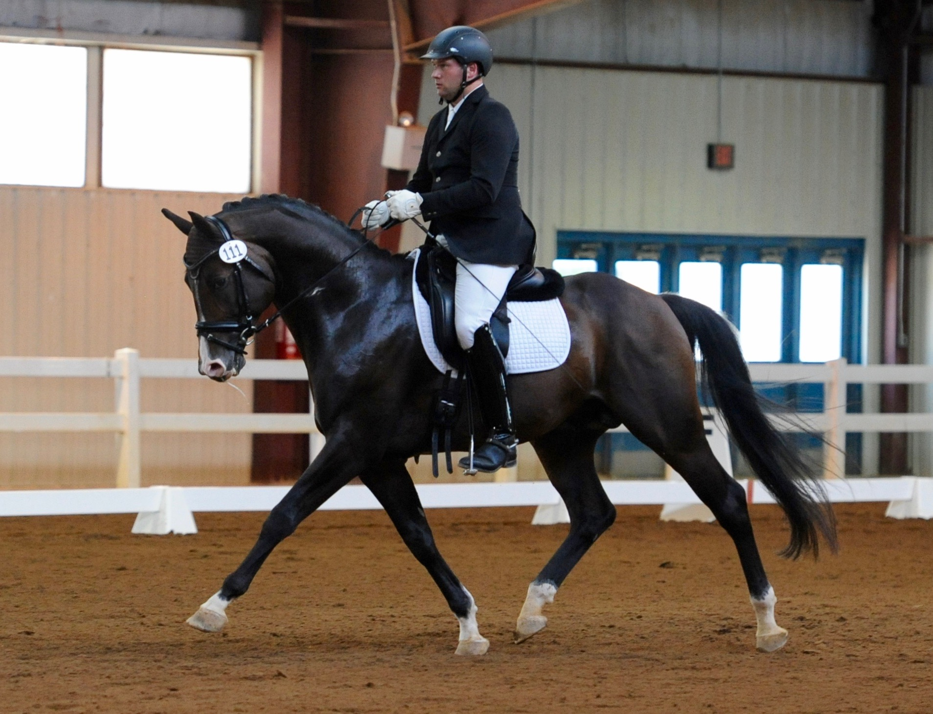 Artie - Dressage at Lexington, 2016