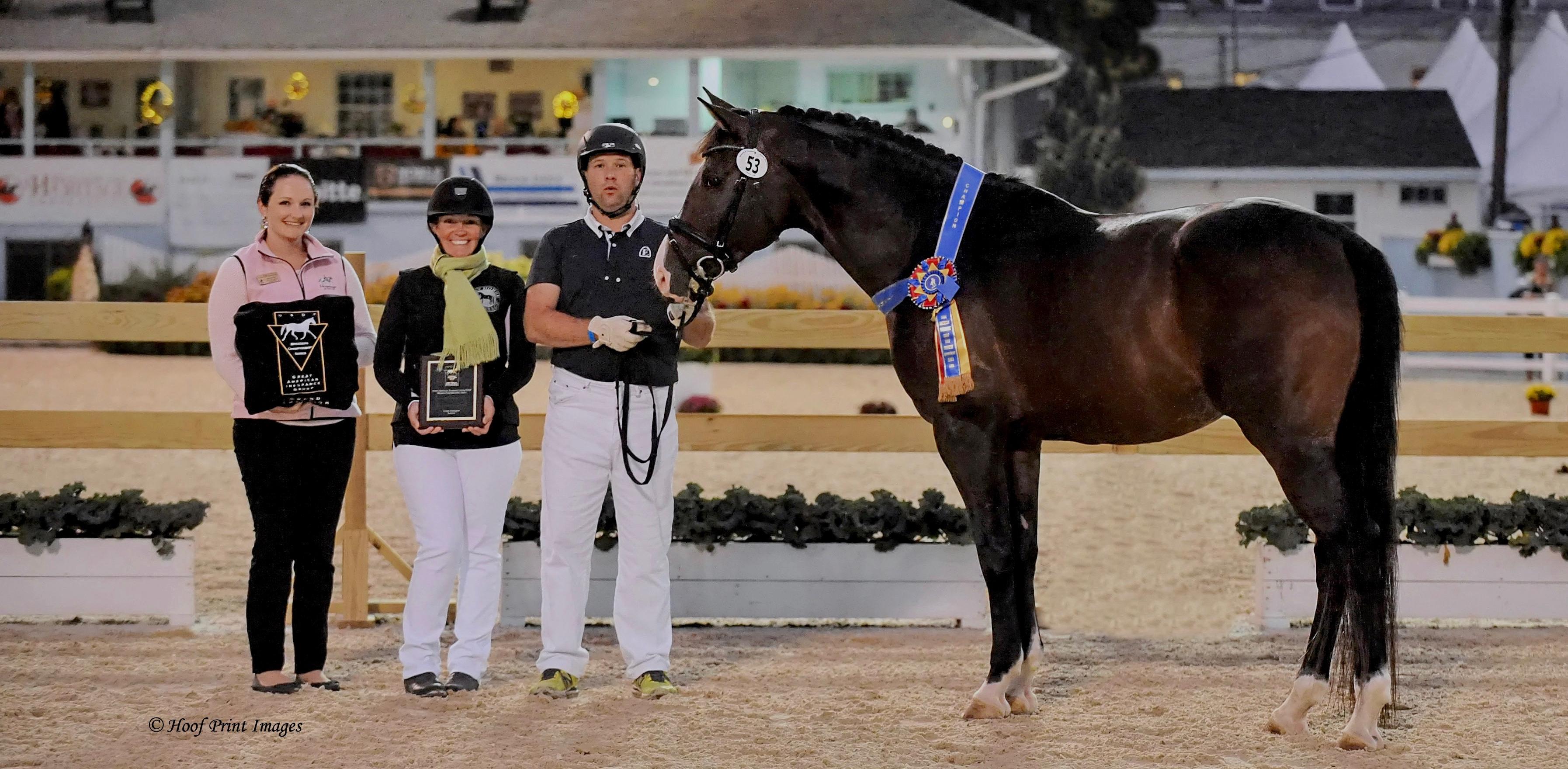 ABIG/USDFBCS Champion Stallion - Eas