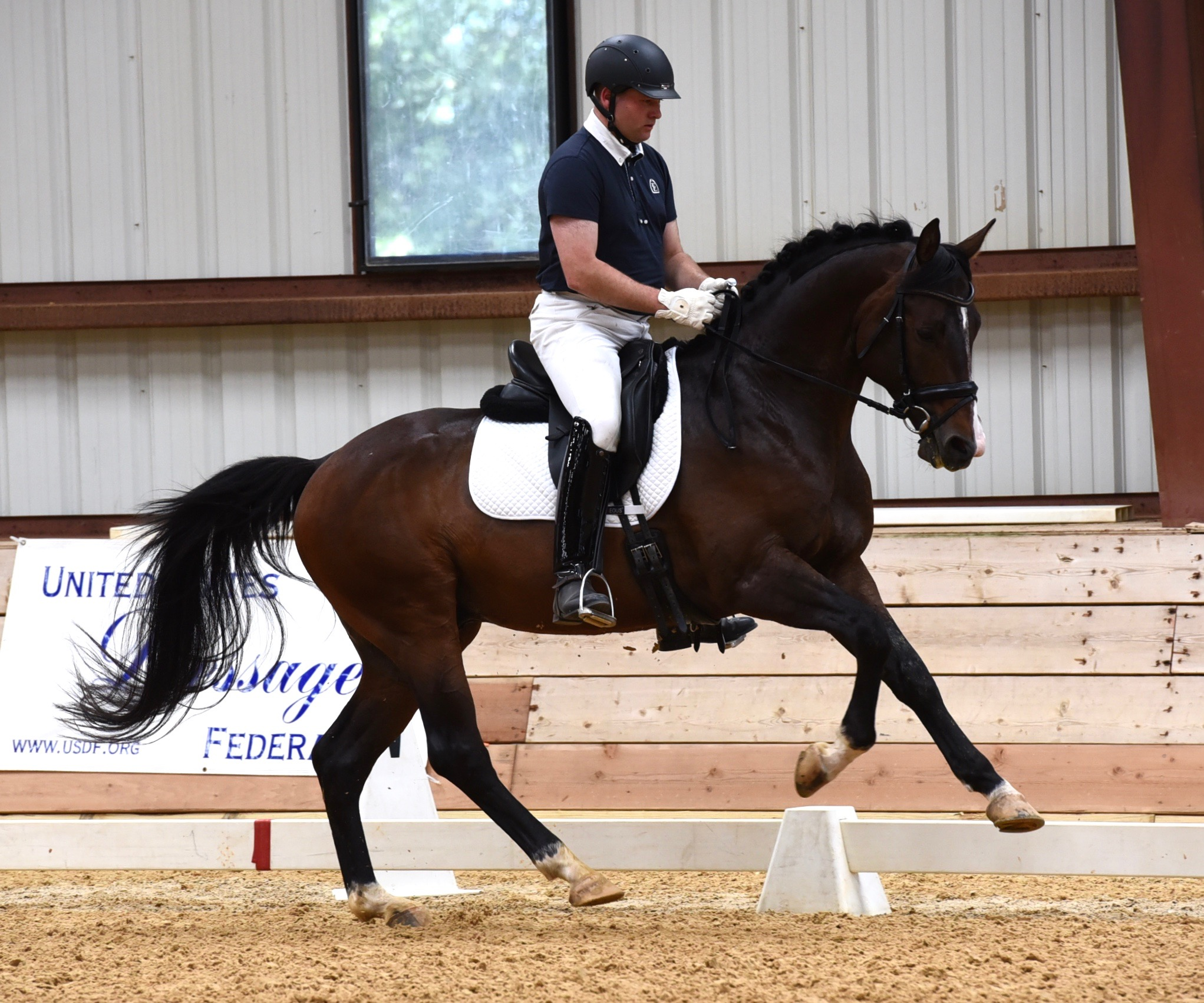 Artie-Dressage at Morven Park, 2016