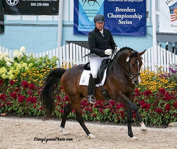 Artie - Dressage at Devon, 2016