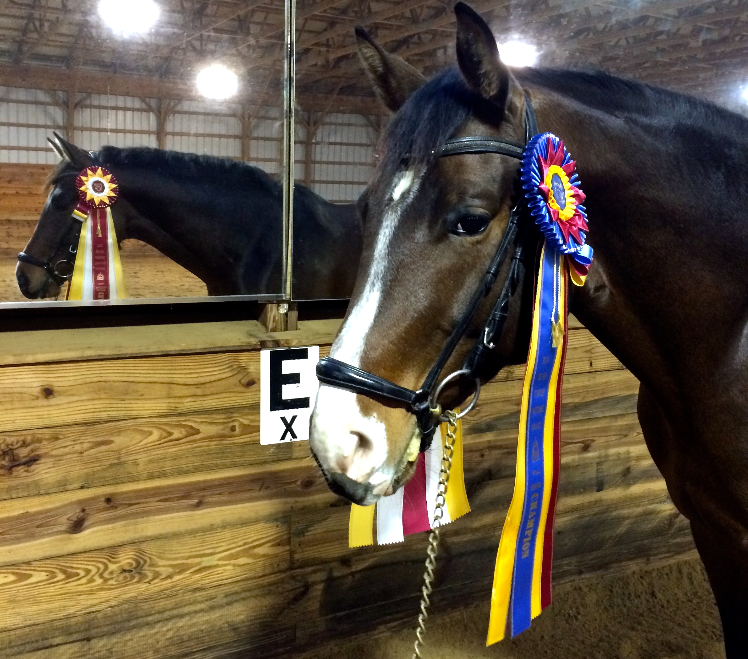 2014 USEF National Grand Champion!!