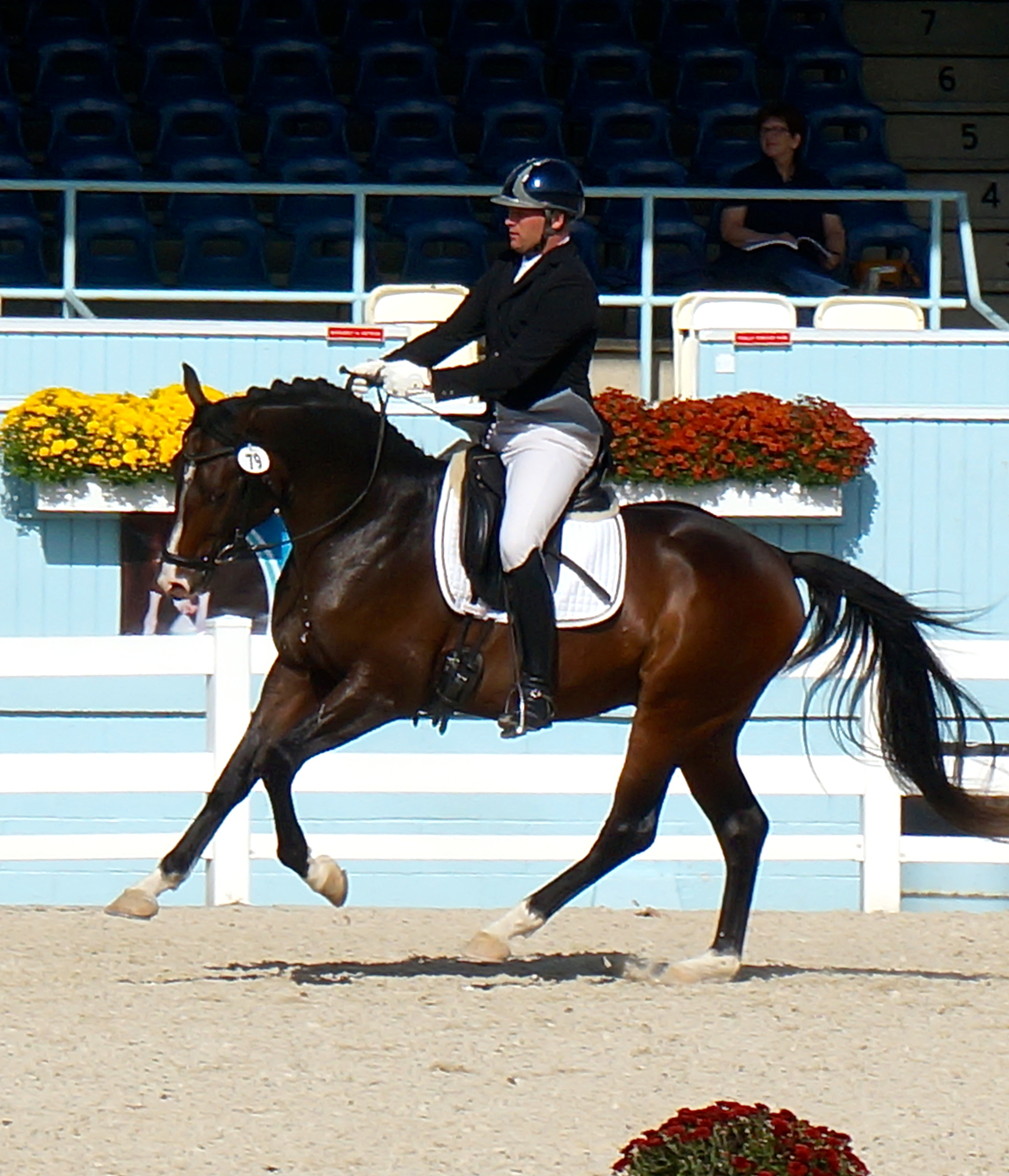 Artie, Dressage at Devon, 2014