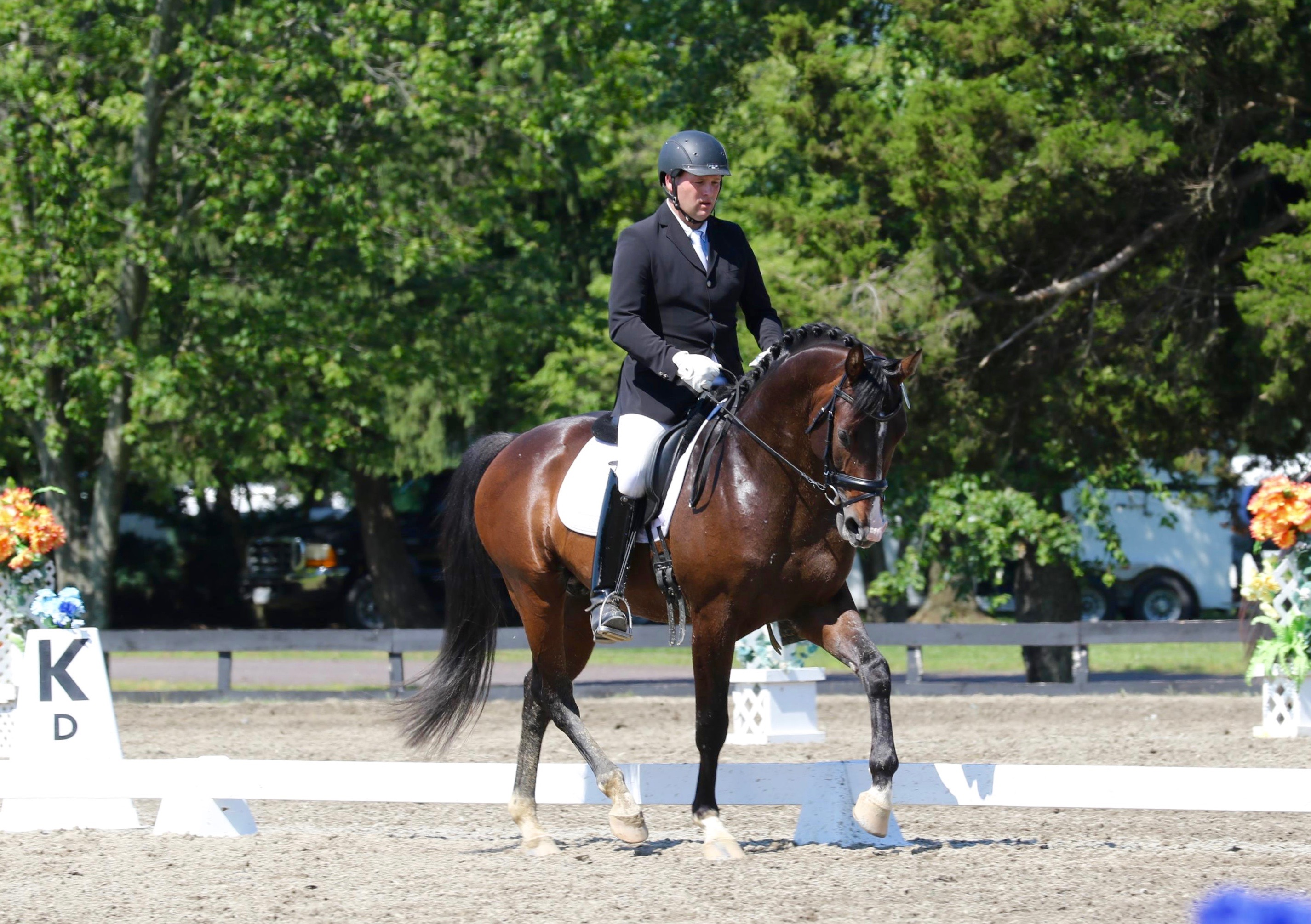 Artie-Virginia Summer Dressage, 2016