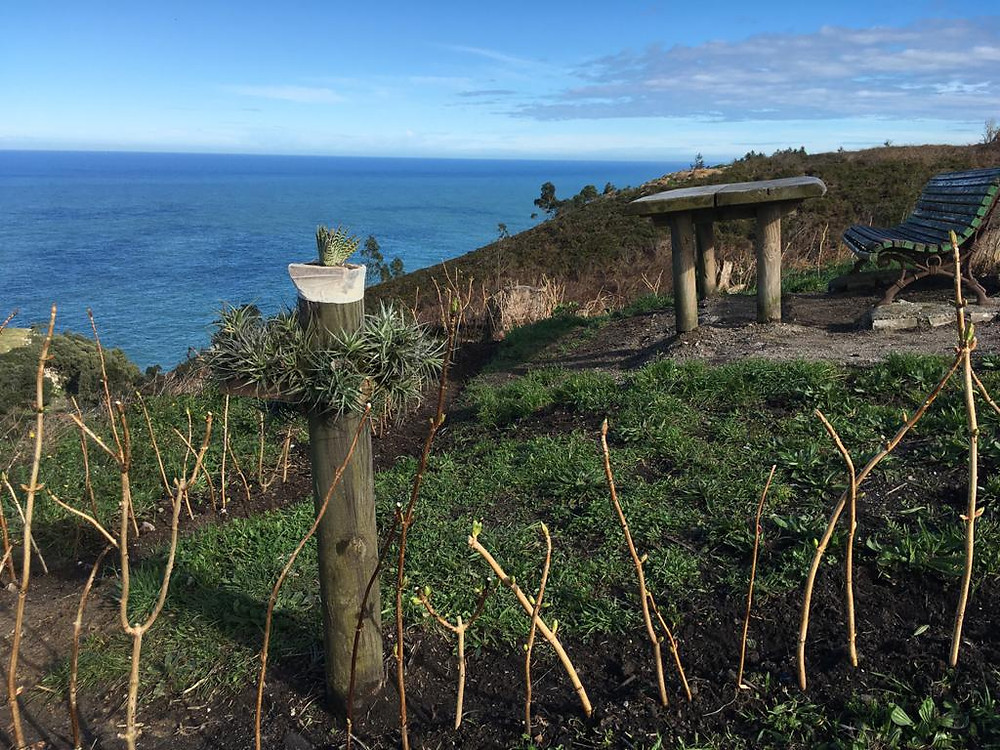 Plantación de hortensias en el Alto de Tina