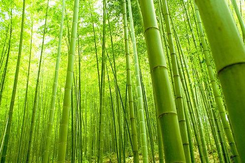 Oriental Bamboo