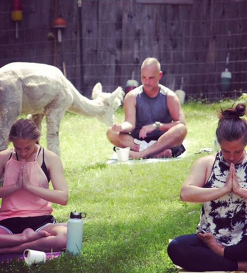 Alpaca Yoga.jpg