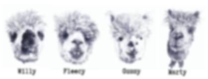 illustration of alpacas