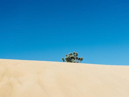 The Desert - Beyond the eyes.