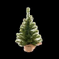 Christmas%20Tree_edited.png
