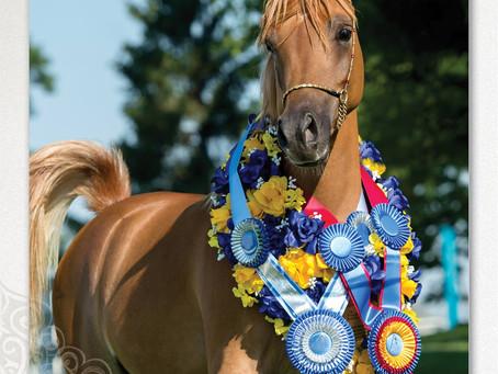 J & J Arabians is Now Hidden Oaks Arabians