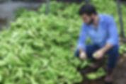 Food Waste Bananas Ecuador Upcycle Nutrition System