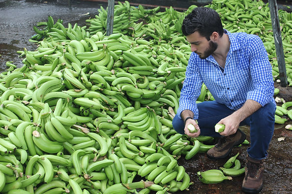 Food Waste Bananas Ecuador Upcycle Nutrition System
