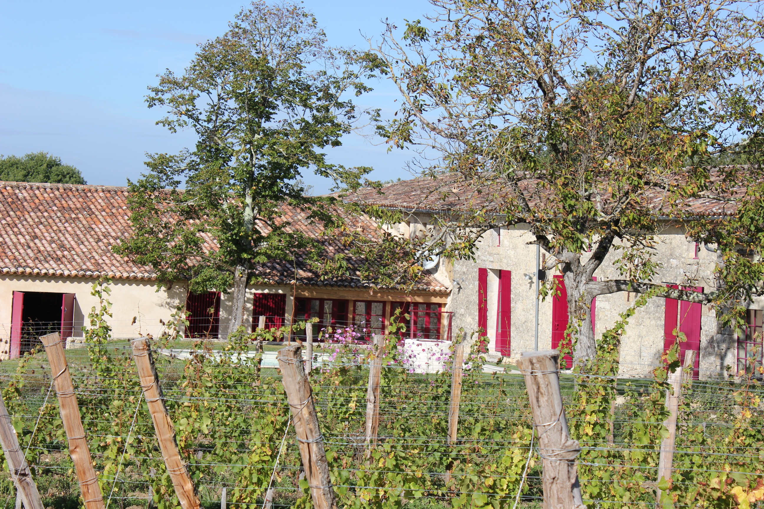 The house is surrounded by vines