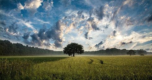 tree-247122_1280 (1)_edited.jpg
