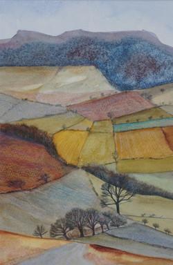 Cartington Fields