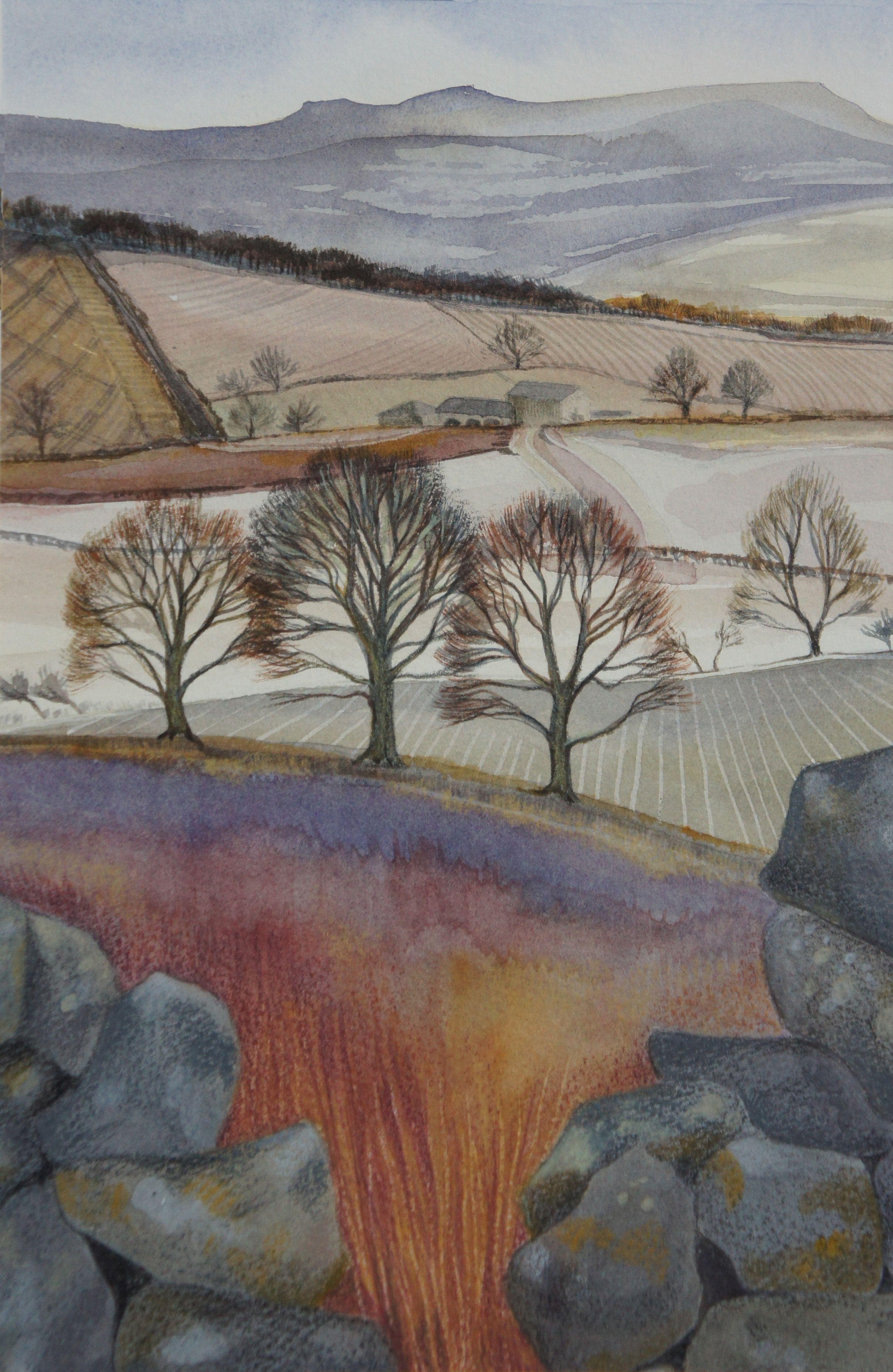 Winter Fields