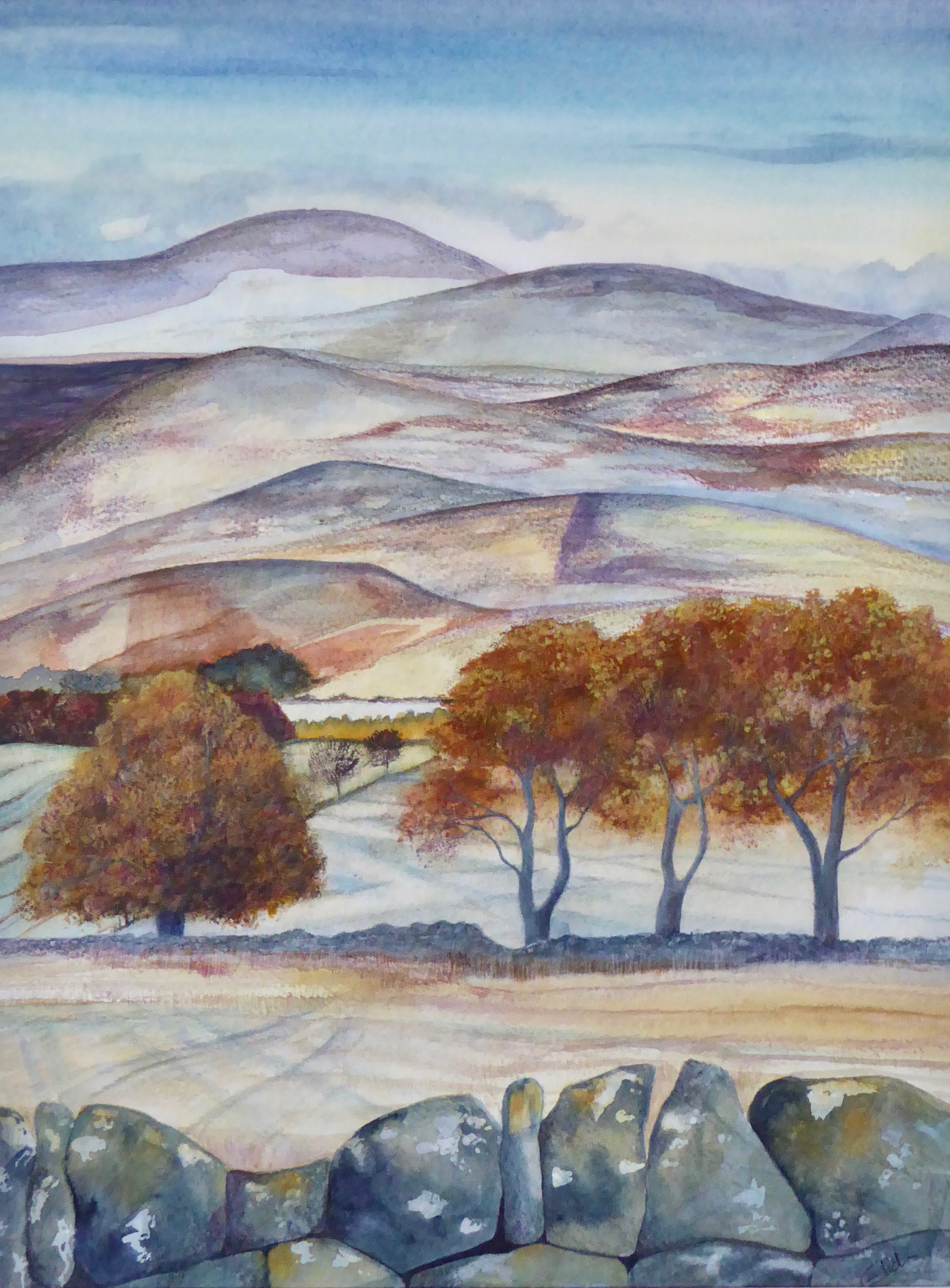 Autumn cheviots, Callaly