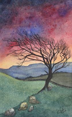 Evening Hawthorn