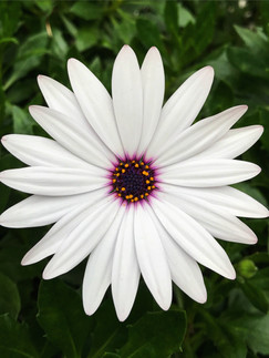 Flor, Mexico copy.JPG