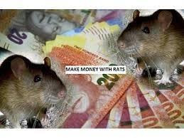 SPIRITUAL RATS FOR MONEY IN BUSHBUCKRIDGE SOUTH AFRICA