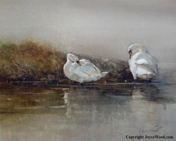 Preening Swans
