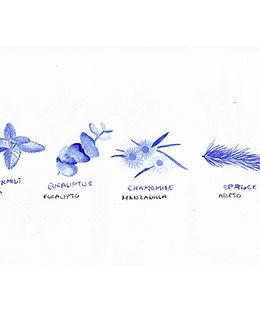 Plantas acuarela 10.jpg