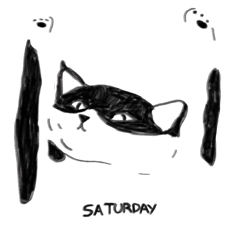 Gato_semanal_sabado