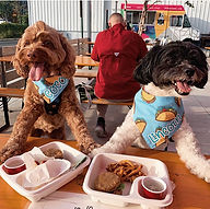 Woofbowl at Caboose Commons