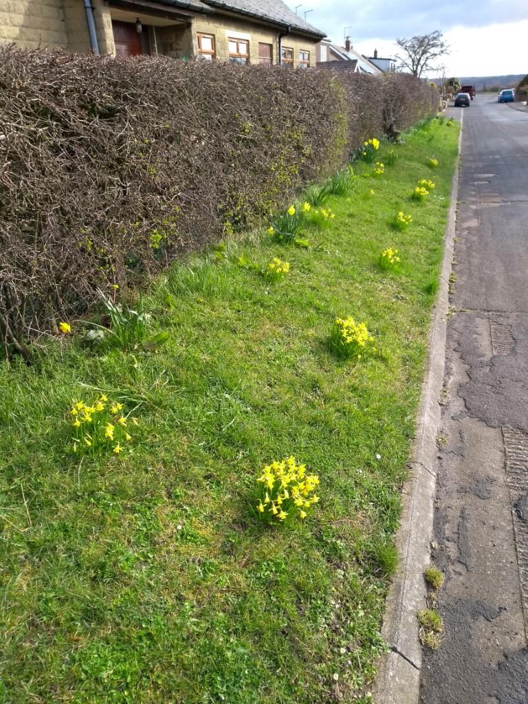 Moor Close looking spring-like