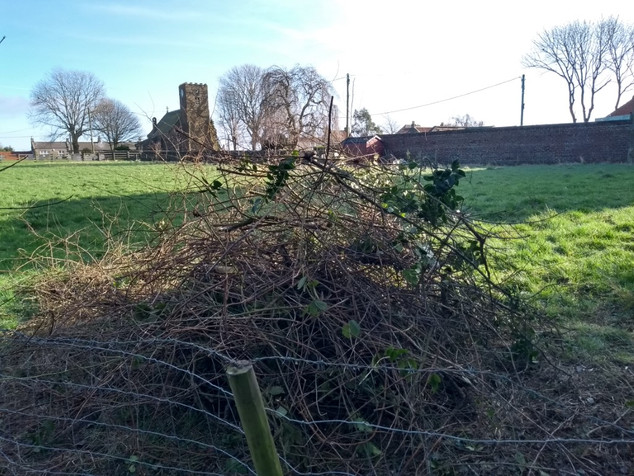 Cleared undergrowth pile getting biggger!