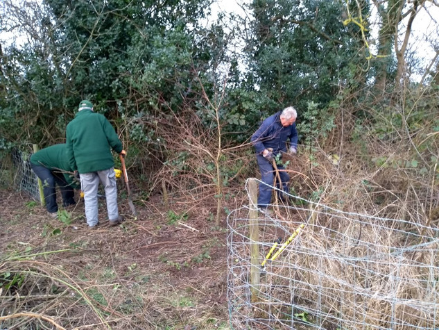 Starting to tackle the overgrown tree plantation