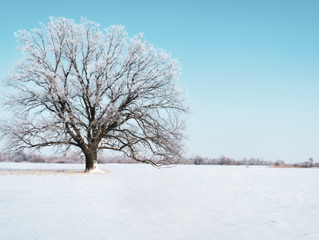 Winter: Our world comes to stillness.