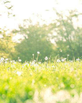 草の中に横たわります