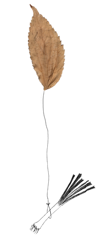leek_leaf.png