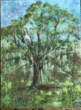 Live Oak Commission