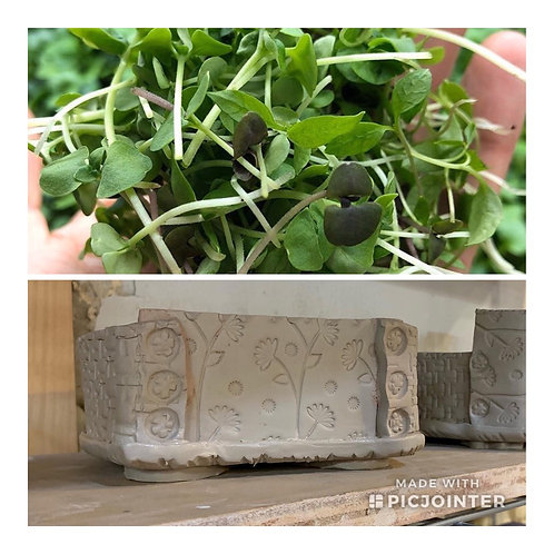 Grow Your Own MicroGreens Kits- With Ceramic Planter