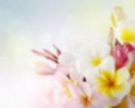 softflowers_edited.jpg