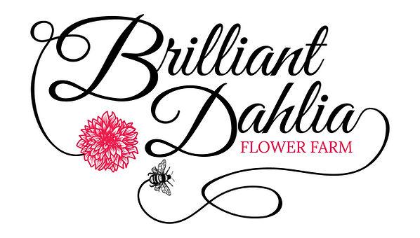 Brilliant_Dahlia_Flower_Farm.jpg