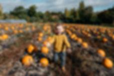 noah pumpkins -127.jpg