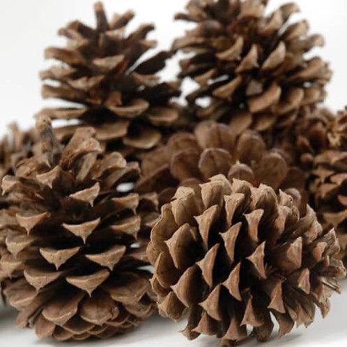 1 Doz Pine Cones - Asst Sizes