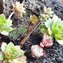 edited succulents.jpg