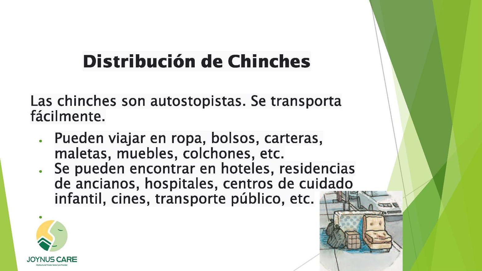 Chinches Alerta_07.jpg