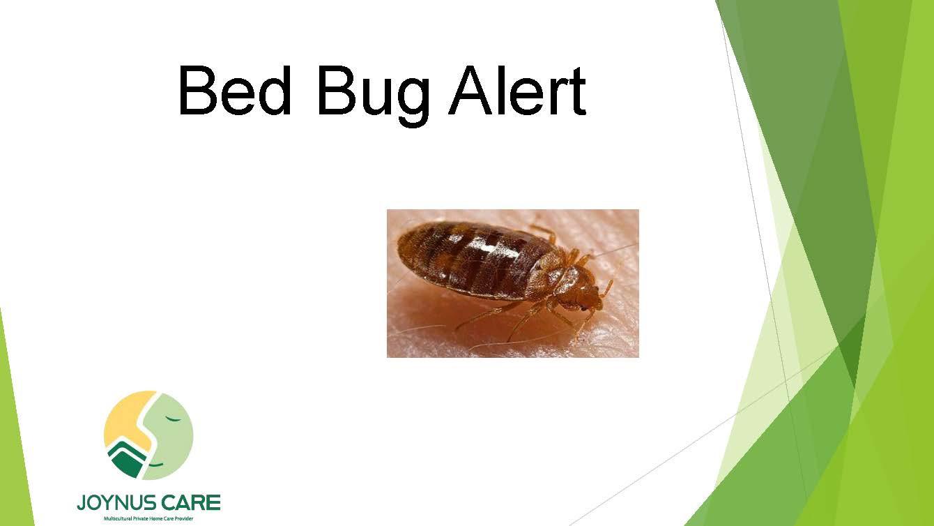 Bed Bug_01