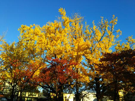 紅葉真っ盛り。京都