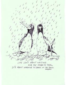 Gooney Birds in Rain