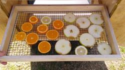 Curso Secador<br>de fruta solar