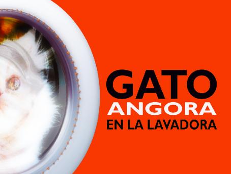 Gato Angora en la lavadora