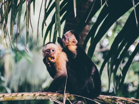 Curú National Park