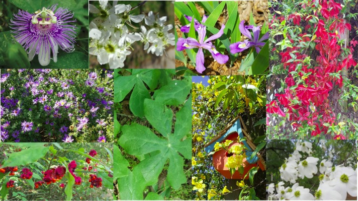 Assortment of small photos of native plants